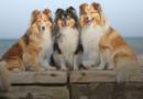 Что нужно знать об обязательном чипировании и регистрации собак