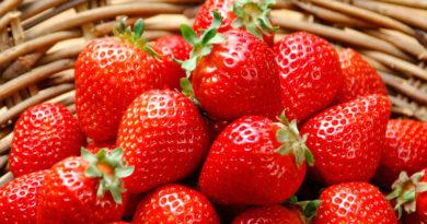 Клубничные поля в Латвии, где можно собрать ягоды самим
