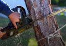 Латвия: вырубка лесов бьет рекорды