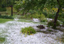 Лето 2017. Курземе замело снегом