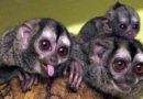 Помоги выбрать имя новорожденной обезьянке!
