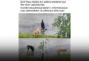 Внимание: в Эзеркрасте бродят агрессивные собаки