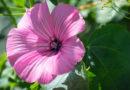Узнай какой цветок соответствует женскому имени