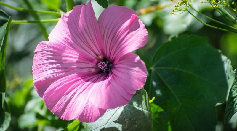 какой цветок подходит к имени татьяна