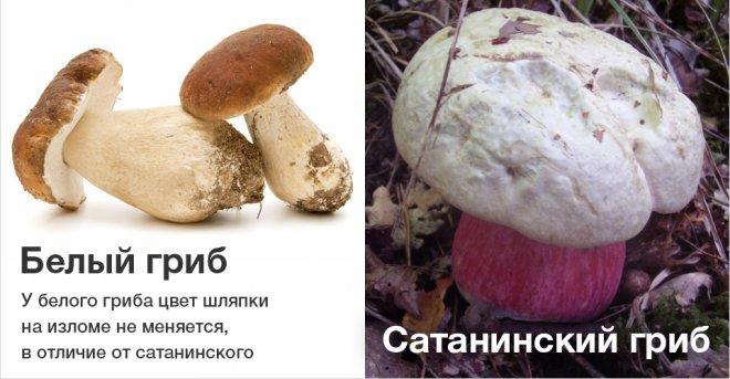 отличие съедобных от несъедобных грибов фото