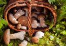 СГД напоминает: доходы от сбора даров природы облагаются налогами