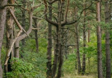 Крупнейшие владельцы лесов в Латвии — иностранцы