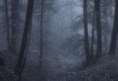 В Курземе мужчина заблудился и провел ночь в лесу