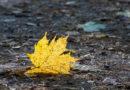 Синоптики: с пятницы похолодает, установится осенняя погода