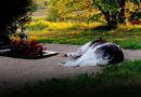 Айзпуте. История достойная экранизации. Собака приходит на кладбище к умершему хозяину