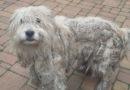 Истощенная и неухоженная собака бродила в Вайнеде