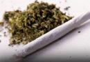 Большинство латвийцев высказались против легализации марихуаны: опрос