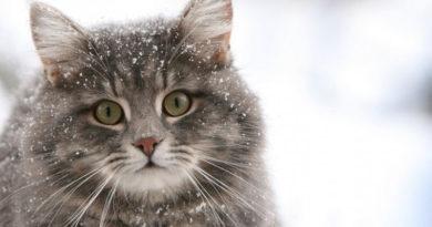 В среду резко похолодает, ожидается снег с дождем