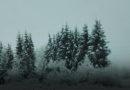 В Латвию пришла зима