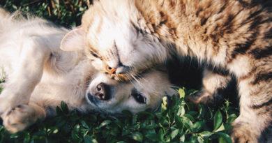 Благотворительная акция в Rimi: можно пожертвовать корм приютам для животных
