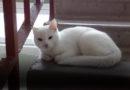 На улице Э.Тиссе в подъезде уже сутки сидит кот