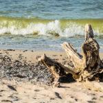 На пляже Каросты утерян кошелек с документами