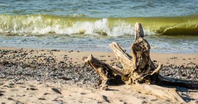 На Курземском побережье появились токсичные сине-зеленые водоросли