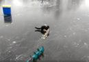 Норка ворует щуку у рыбаков (видео)