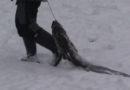 Лиепайчанин поймал щуку весом 17,5 кг (видео)