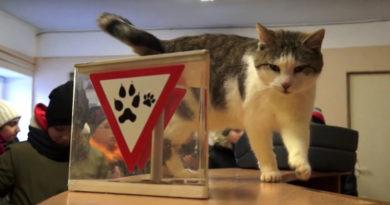 Приют для животных посетили юные лиепайчане