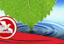 Присоединяйтесь: «Большая толока» на берегу Барты (видео)