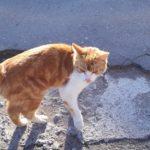 Кот-потеряшка очень хочет вернуться домой!