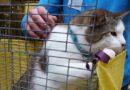 В субботу в т/ц «BAATA» состоится выставка кошек из приюта