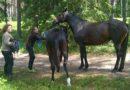 Пожарные спасли двух лошадей, провалившихся в болото