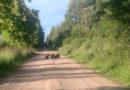 Дорогу оккупировали медвежата: людей призвали к бдительности