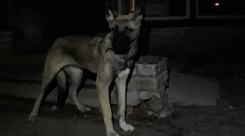 Возле приюта бросили собаку, привязав к двери