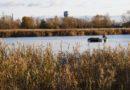 На Лиепайском озере завершились очистительные работы (+видео)