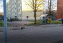 Собака бегает без хозяина. Побежала в сторону парка