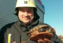 Спасатели помогли черепахе выбраться из замерзшей реки