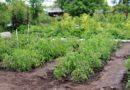 Самоуправление призывает владельцев огородов освободить территорию