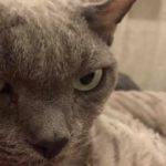 В Эзеркрасте пропал кот Гоша!