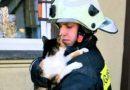 Пожарные спасли кота, застрявшего в окне