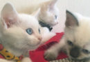 Красивые котятки ищут заботливую семью