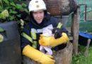 День защиты животных – спасатели рассказали о спасенных в этом году