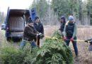 Ребятишкам из лиепайского Детского дома привезли елку (видео)