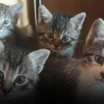 Отдают котят в хорошие руки