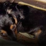 В подъезд выбросили щенка: известно кто, но доказать сложно