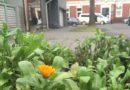 Из-за тепла в Лиепае проснулись ежи (видео)