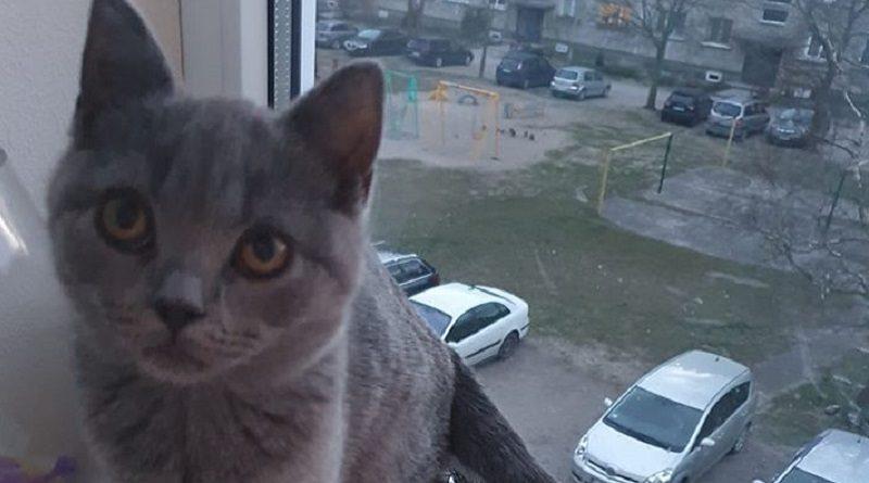Лиепайчанка: Пожалуйста, верните кота, готова платить вознаграждение!