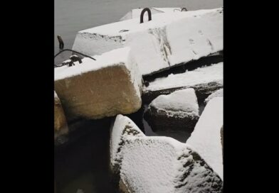 Лиепая: норка резвится в снегу (видео)