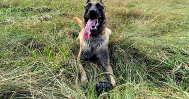 Служебная собака Марко помогла найти пенсионерку в лесу