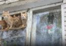 Тысячи латвийцев живут в квартирах, которые опасны для здоровья и жизни