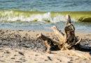 Опубликован список самых грязных и самых чистых морских пляжей Латвии