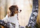 В Латвии ужесточены правила содержания собак