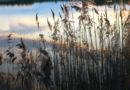 На Лиепайском озере люди в лодке не могли попасть на берег